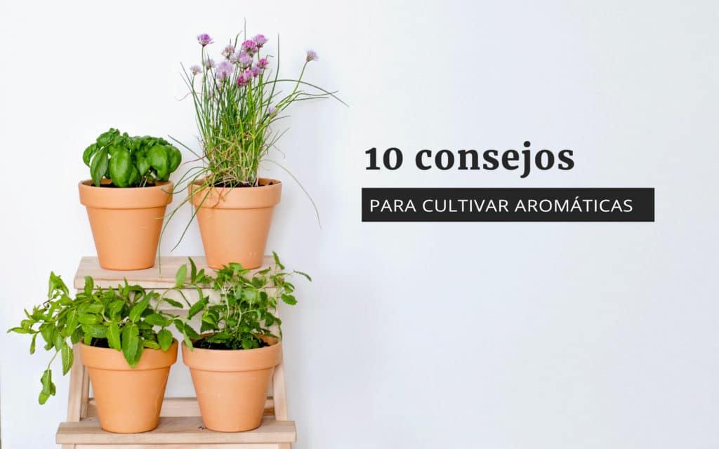 Huerto de arom ticas 10 consejos para empezar uno for Plan de negocios de un vivero de plantas