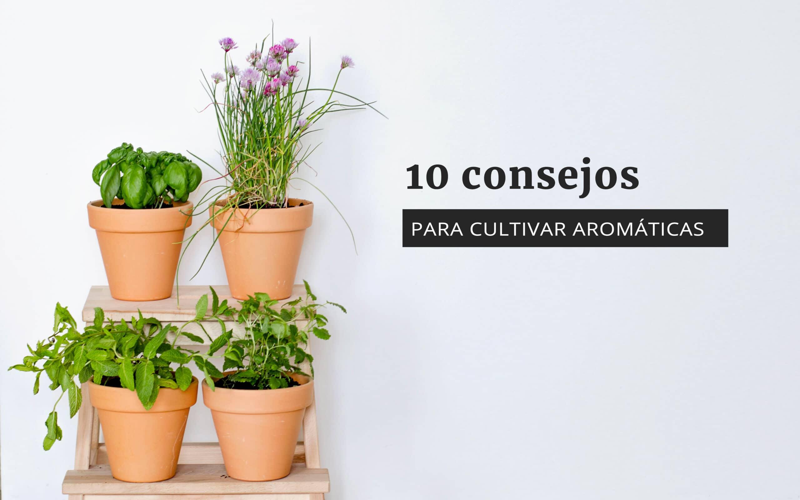 Huerto De Aromáticas 10 Consejos Para Empezar Uno