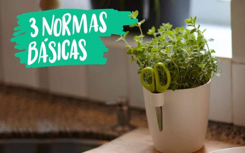 Plantea Blog - El cultivo en macetas: 3 normas básicas on