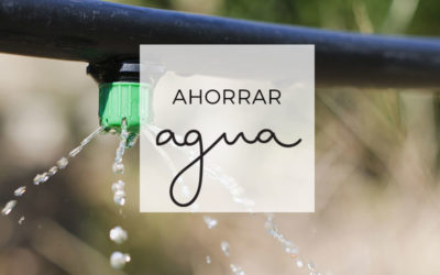 12 – Ahorrar agua en el huerto