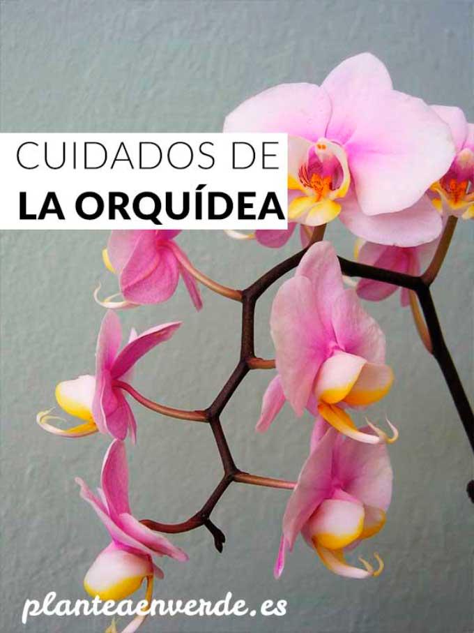 Cuidados De La Orquidea La Guia Completa Plantea En Verde - Orquideas-blancas-cuidados