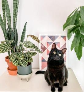 Gatos y plantas