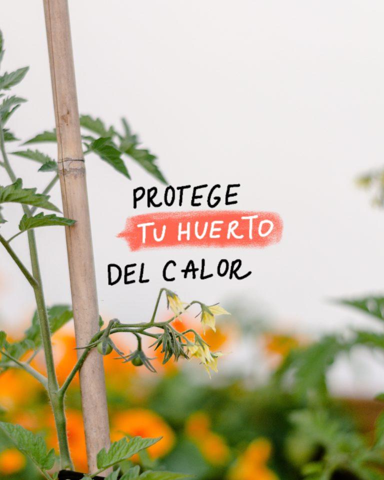 Cómo proteger el huerto y las plantas del calor