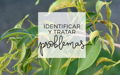 18. Identificar problemas y escoger el mejor tratamiento