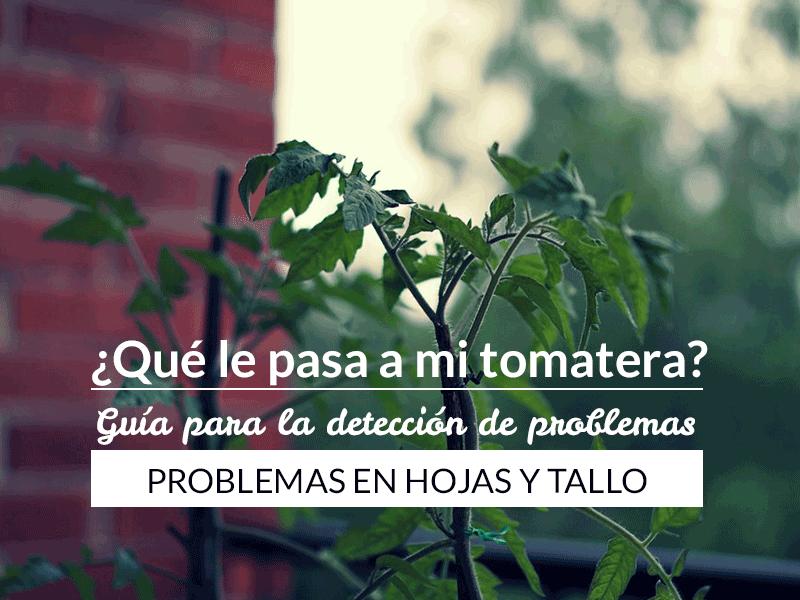 Qué le pasa a mi tomatera? - Problemas en hojas y tallo