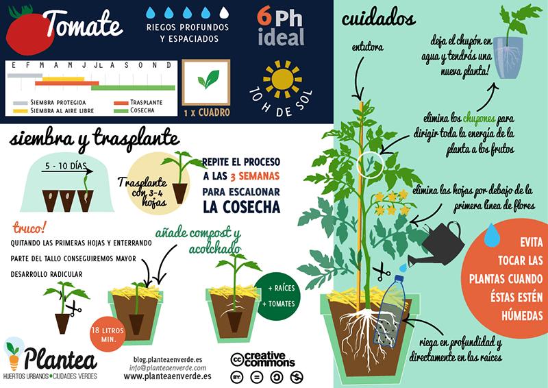 10 consejos pr cticos para el cultivo del tomate plantea - Como plantar marihuana en casa paso a paso ...