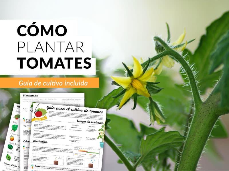 C mo cultivar tomates en casa gu a paso a paso plantea for Como cultivar peces en casa