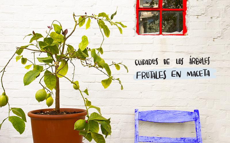 cuidados de los árboles frutales en maceta | consejos y claves