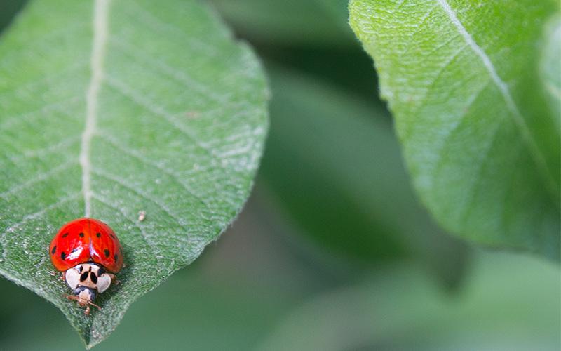Cómo diseñar el huerto para prevenir plagas