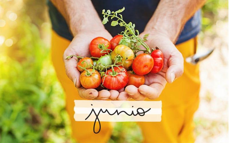 Plantea Blog - Qué plantar en Junio | El huerto en Junio