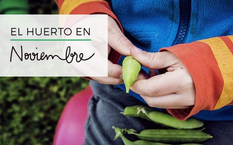 Qué plantar en noviembre | Siembras y tareas del huerto