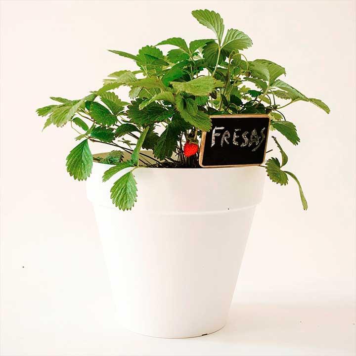 Plantar fresas de maceta en huerto casa dise o - Plantar en maceta ...