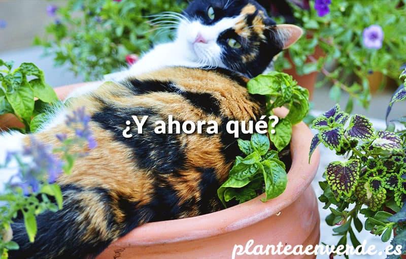 Plantea blog c mo evitar que los gatos arruinen tu for Como ahuyentar gatos del jardin
