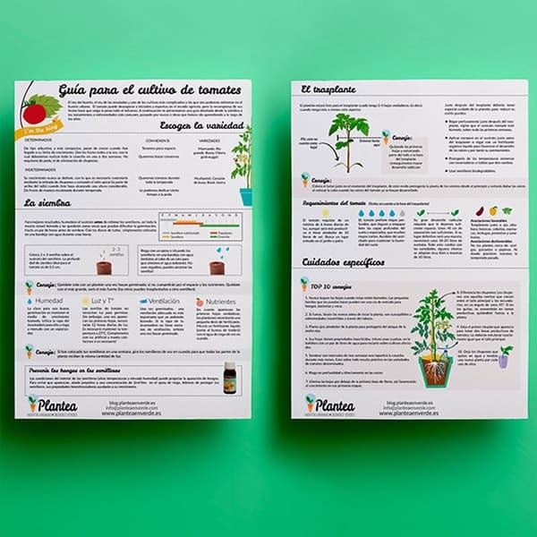 Guía de cultivo de tomates