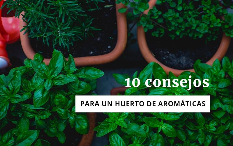 10 consejos para un huerto de aromáticas
