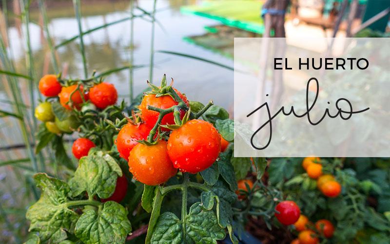 El huerto en Julio | Calendario de siembra