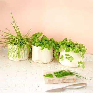 Kit de cultivo de aromáticas en casa