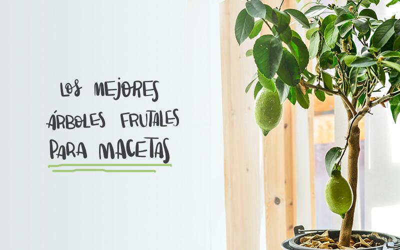 Frutales en maceta cmo escoger la mejor variedad