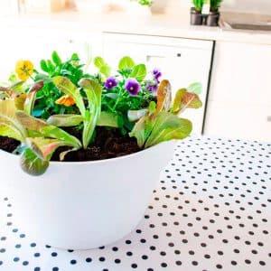 Jardineras y macetas plantea en verde - Macetas con autorriego ...