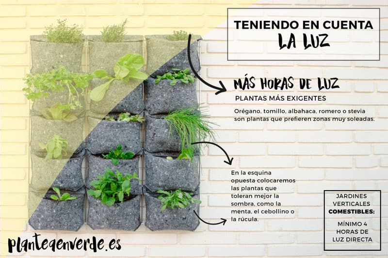 organización de las plantas jardín vertical y horas de luz