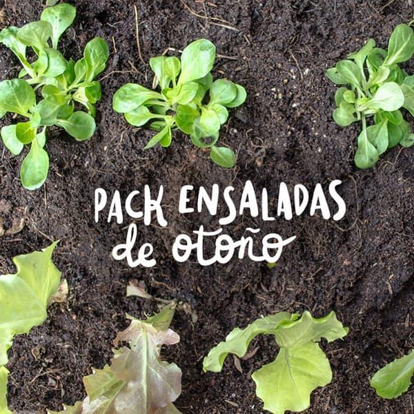 Pack plantel ensaladas oto o plantea en verde for Jardin de invierno sa