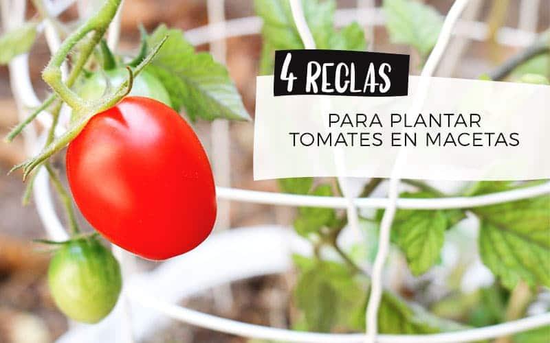 Plantea Blog 4 Reglas Para Plantar Tomates En Macetas
