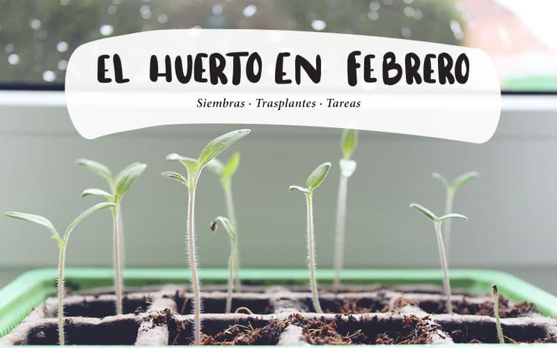 Qué plantar en febrero en el huerto | Calendario siembra descargable