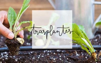 7- Trasplantes