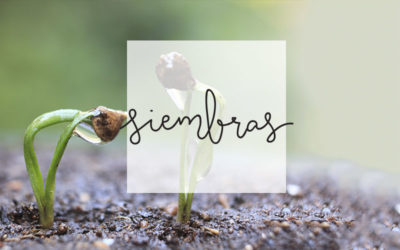 6 – Siembras